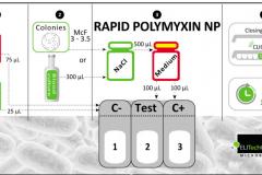 Rapid Polimixina NP