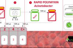 Rapid polimixin Acineto