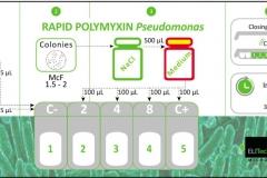 Rapid polimixin Pseudo